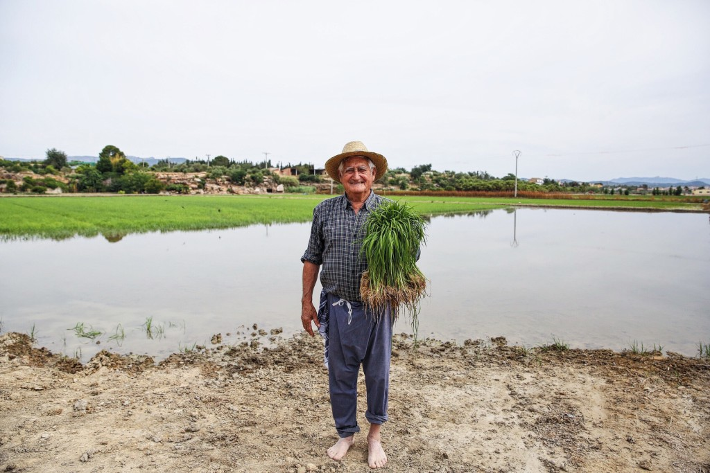Rice Farmer Catalonia