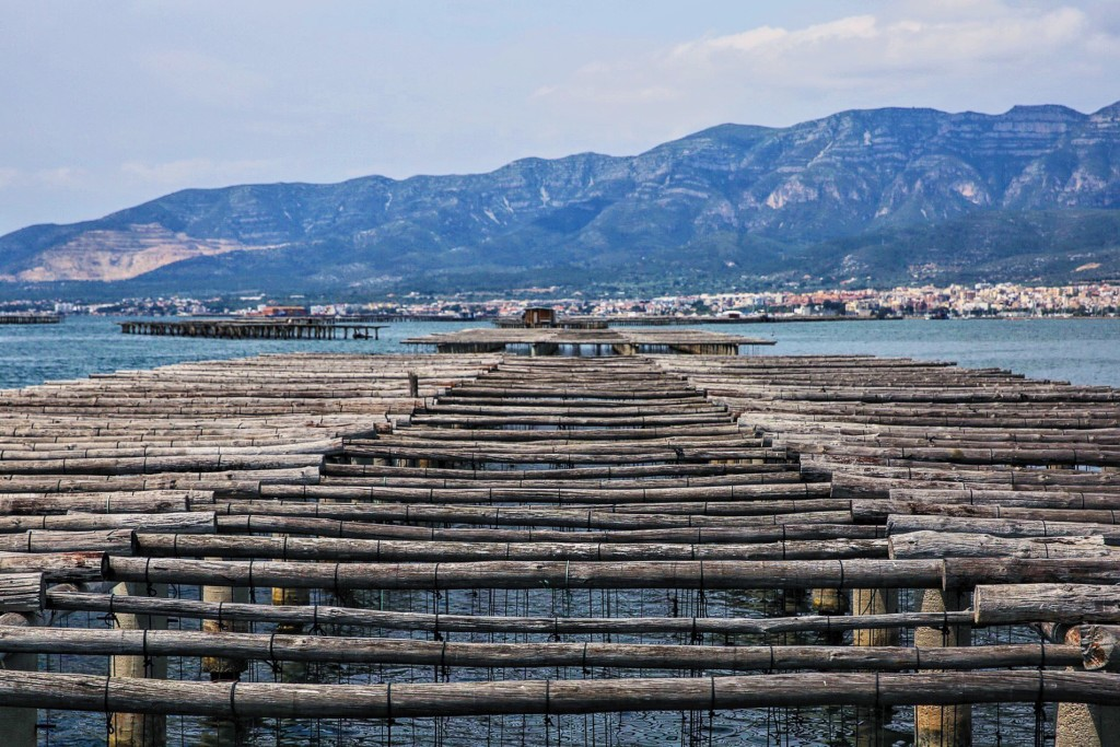 Mussel Beds Spain