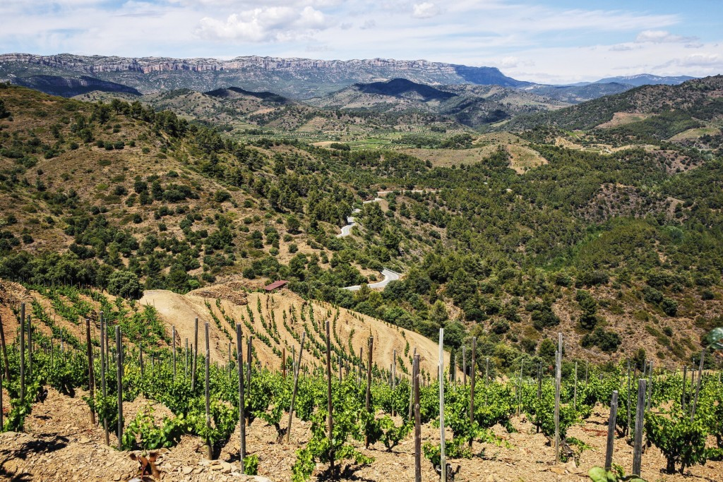 Vineyards Priorat